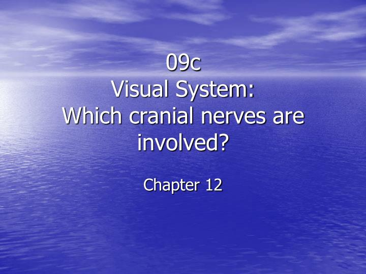 09c visual system which cranial nerves are involved chapter 12