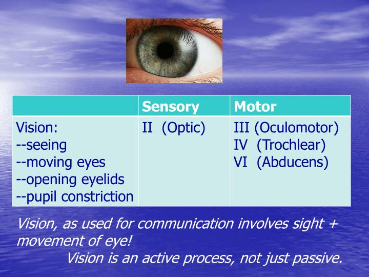 Vision, as used for communication involves sight + movement of eye!