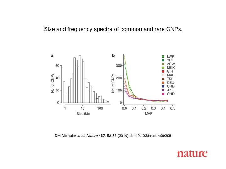 Size and frequency spectra of common and rare CNPs.