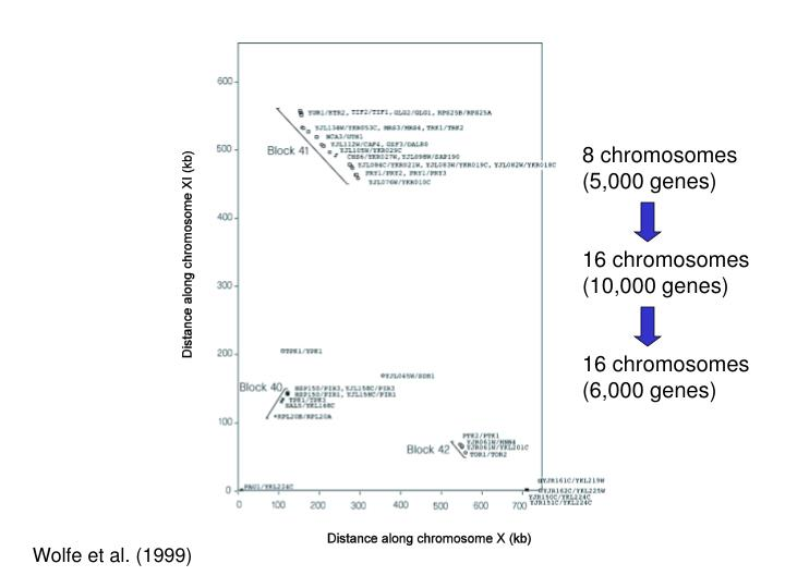 8 chromosomes