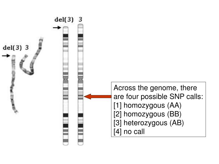 Across the genome, there