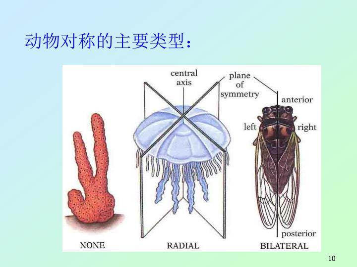 动物对称的主要类型: