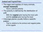 animal and vegetal poles