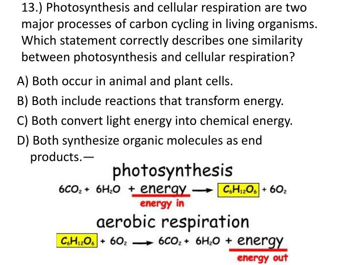 what is the difference between photosynthesis and cellular respiration What is the difference between photosynthesis and cellular respiration photosynthesis is an anabolic process cellular respiration is a catabolic process.