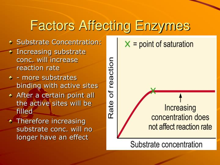 effect of substrate concentration on rate of reaction essay Read this essay on how concentration affects rate of reaction 20/9/2013 how substrate concentration affects a catalase enzyme reaction rq how does changing the substrate concentration these are all the factors in general that have distinct effects on rates of reaction.