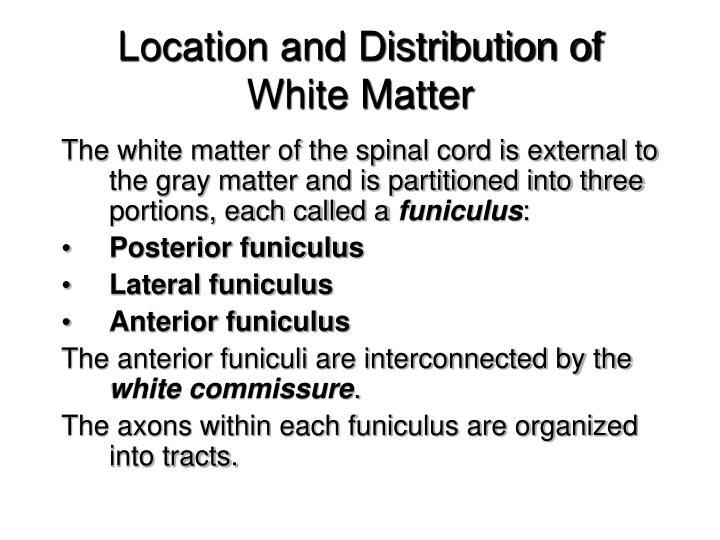Location and Distribution of White Matter