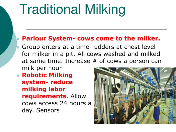 Traditional Milking