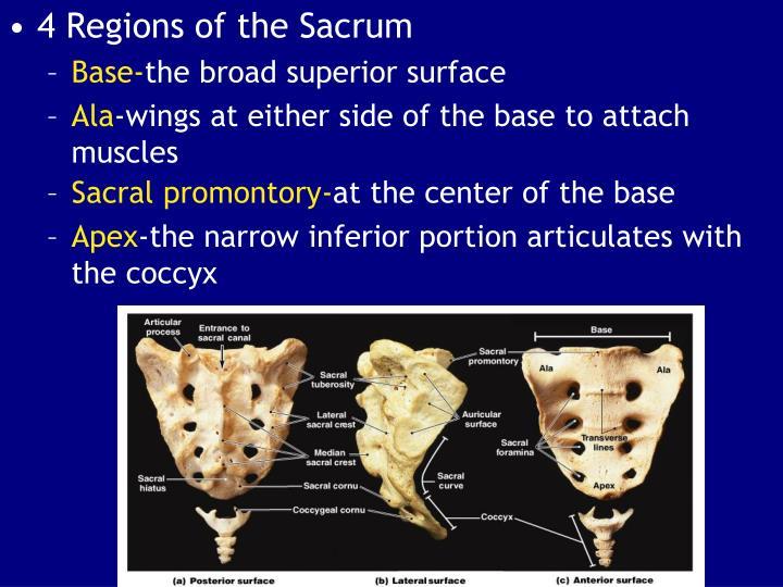 Sacral promontory-