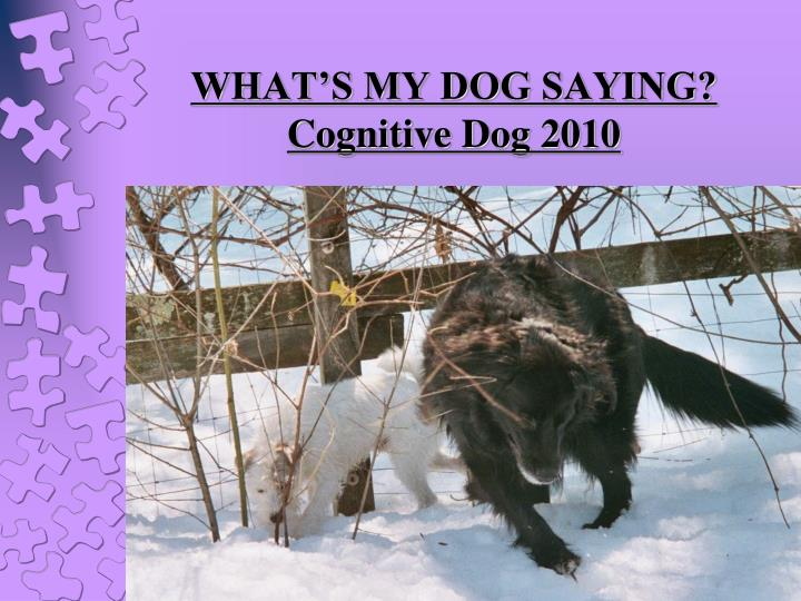 what s my dog saying cognitive dog 2010 carolyn barney cpdt n.