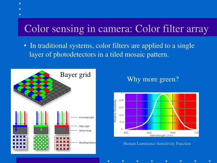 Human Luminance Sensitivity Function
