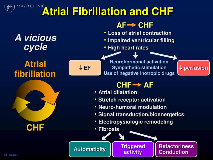 Atrial Fibrillation and CHF
