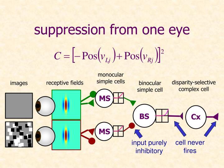 input purely inhibitory