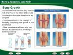 bone growth