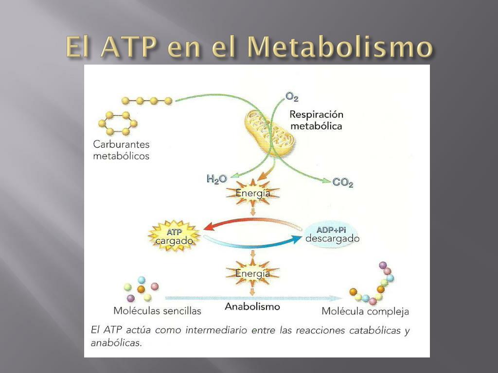 Nuevas preguntas sobre Tipos de metabolismo respondieron y por qué debe leer cada palabra de este informe