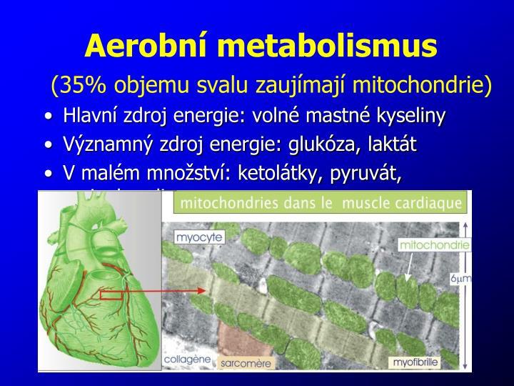 Aerobní metabolismus