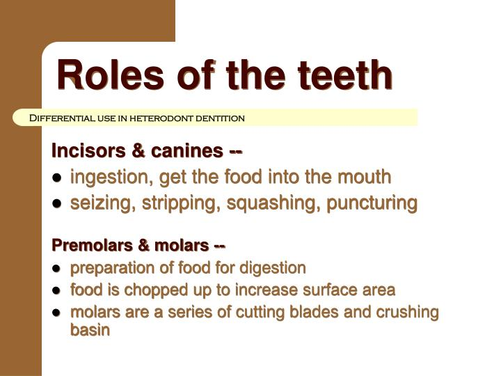 Roles of the teeth