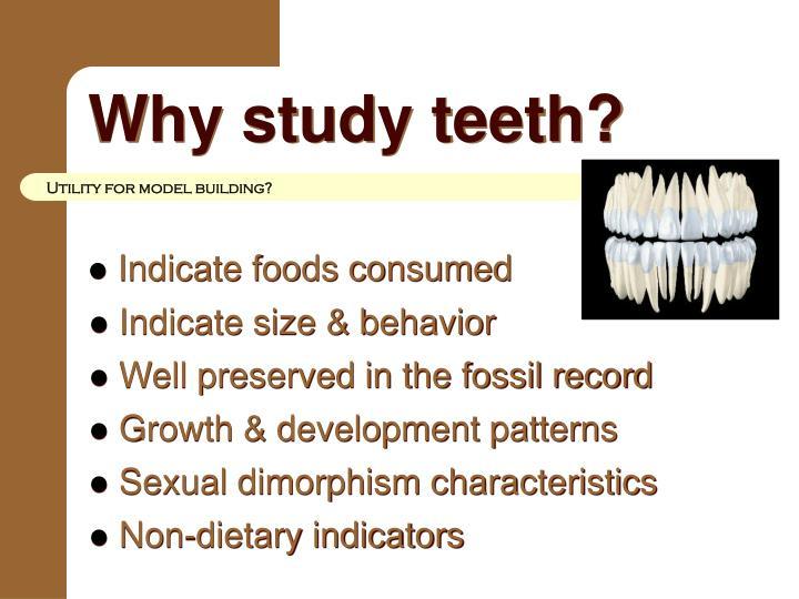 Why study teeth