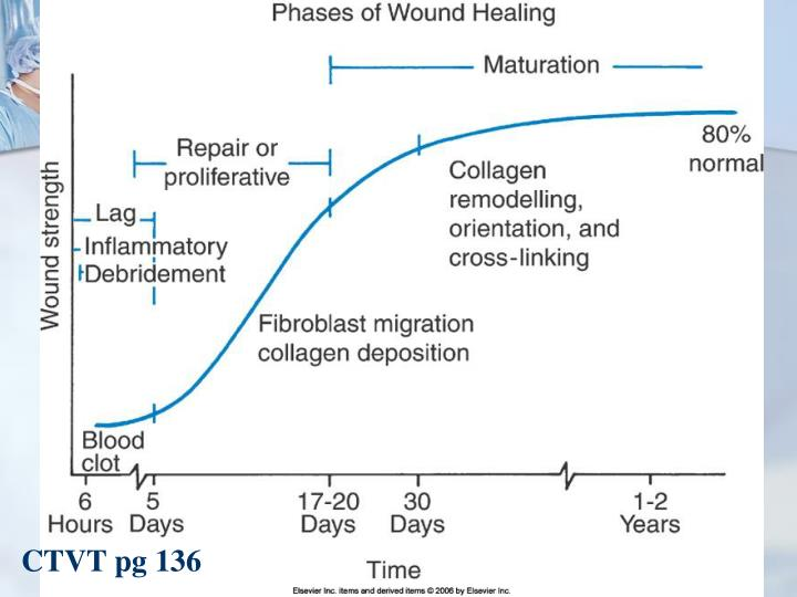Phases Of Wound Healing Chart | thelifeisdream