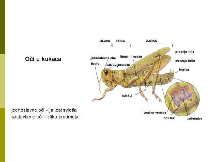 Receptori i sistem informiranja organizma