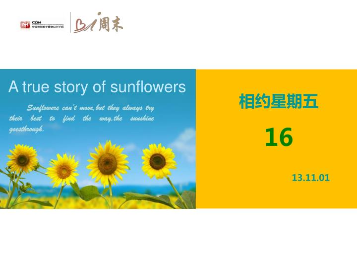 A true story of sunflowers