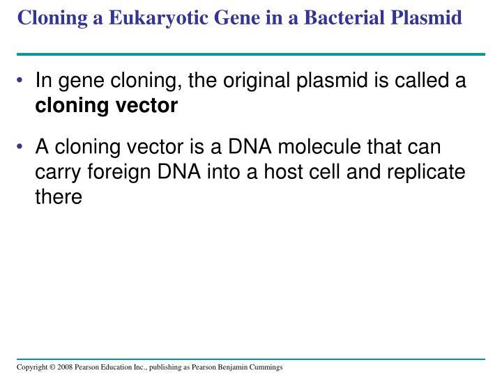 Cloning a Eukaryotic Gene in a Bacterial Plasmid