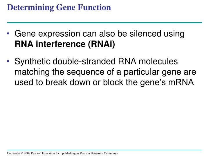 Determining Gene Function