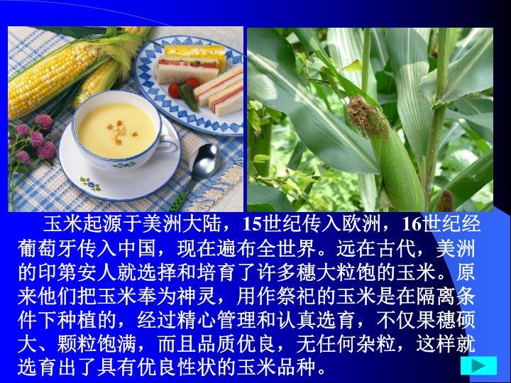 玉米起源于美洲大陆,