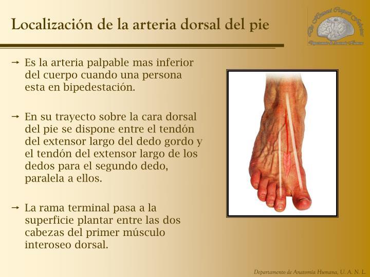 PPT - UNIDAD 6. Extremidad Inferior PowerPoint Presentation - ID:4016443