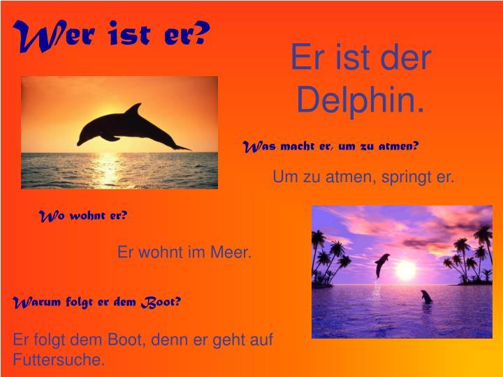 Er ist der delphin
