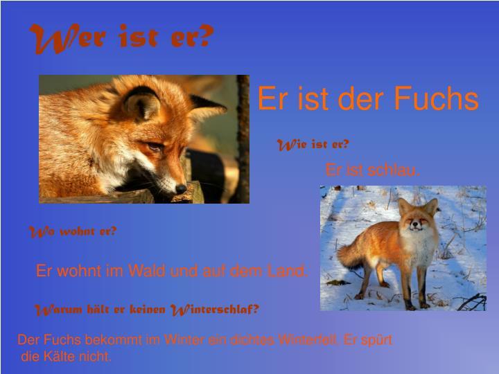 Er ist der Fuchs