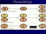 plasmid biology