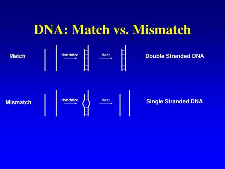 DNA: Match vs. Mismatch