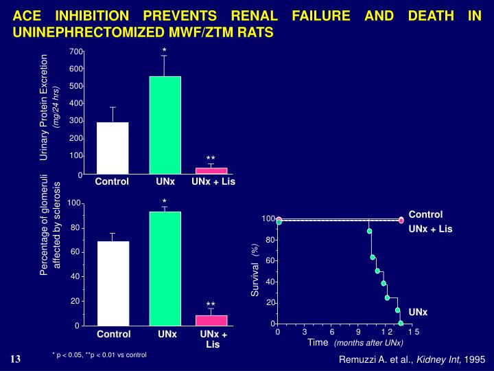 ACE INHIBITION PREVENTS RENAL FAILURE AND DEATH IN UNINEPHRECTOMIZED MWF/ZTM RATS