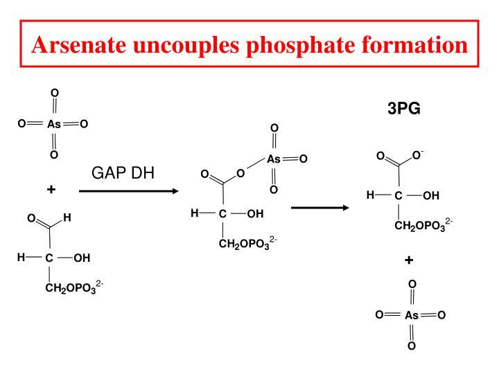 Arsenate uncouples phosphate formation