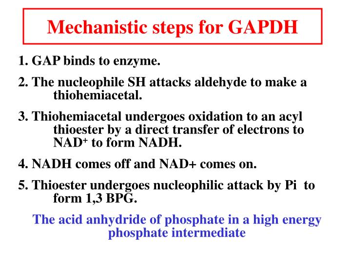 Mechanistic steps for GAPDH