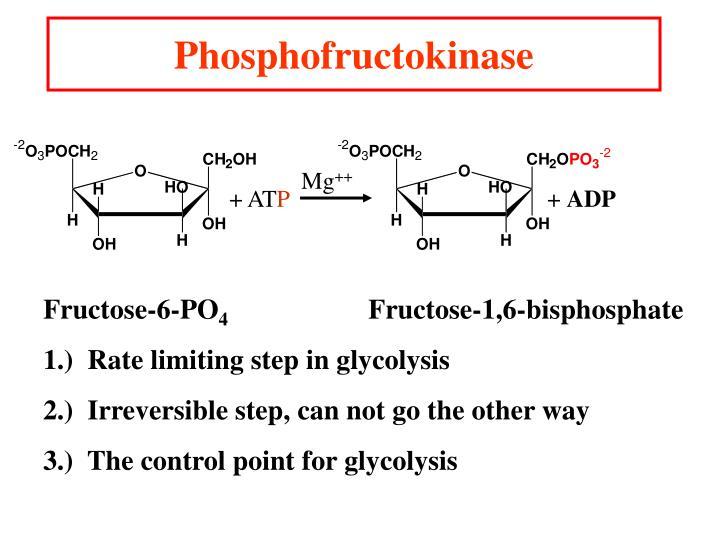 Phosphofructokinase