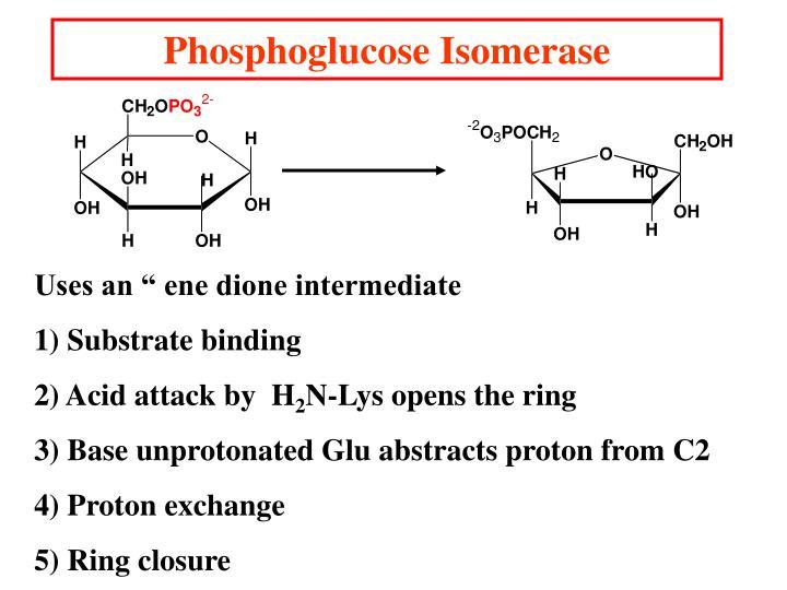 Phosphoglucose Isomerase