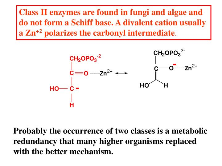 Class II enzymes are found in fungi and algae and do not form a Schiff base. A divalent cation usually a Zn