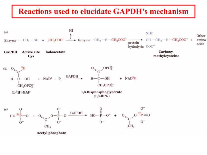 Reactions used to elucidate GAPDH's mechanism