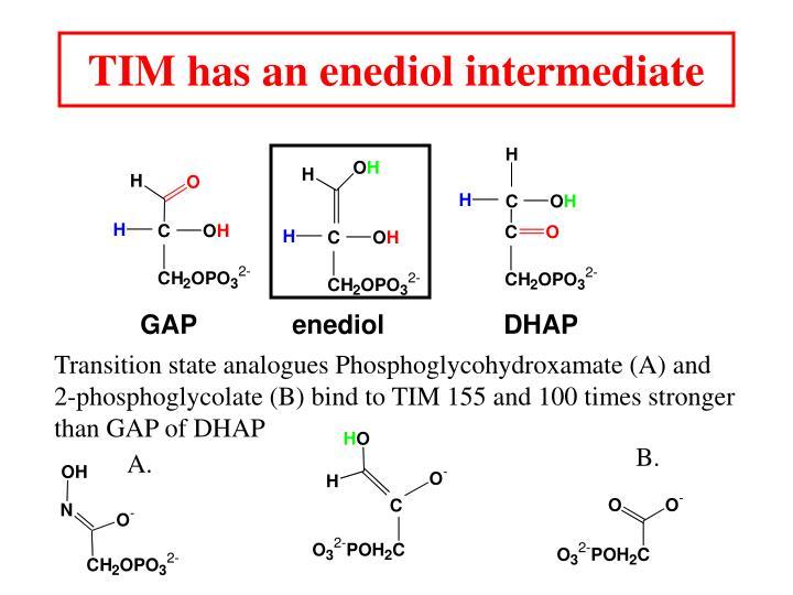 TIM has an enediol intermediate