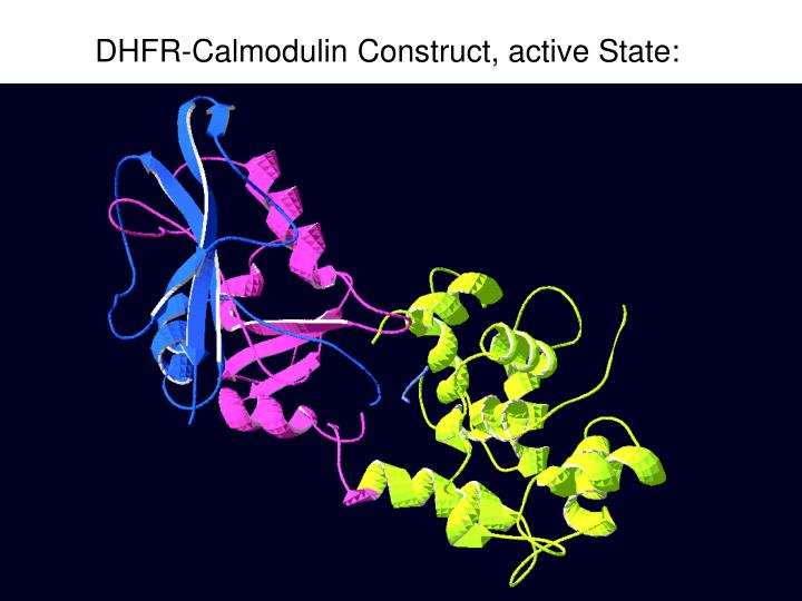 dhfr calmodulin construct active state n.