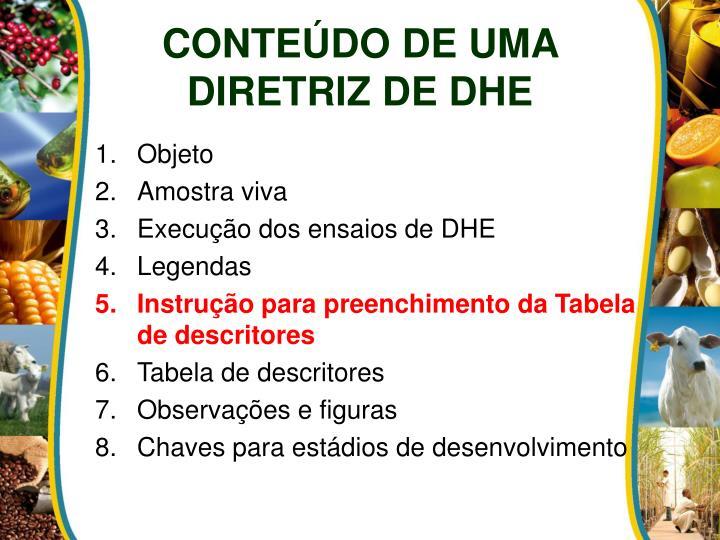CONTEÚDO DE UMA