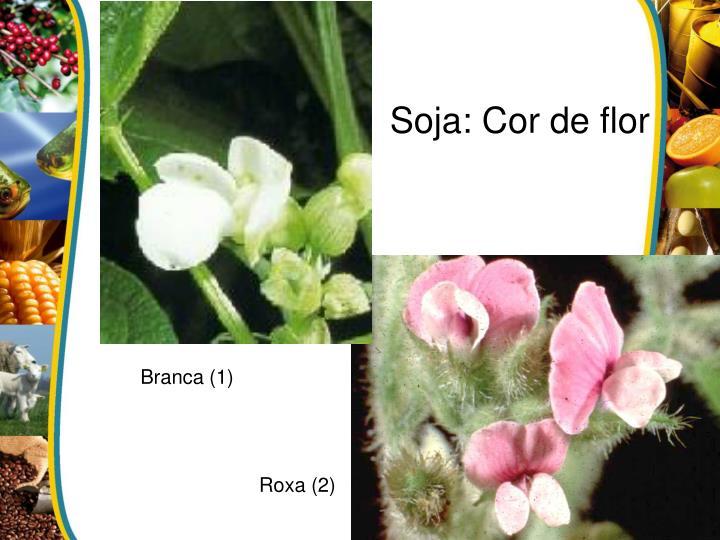 Soja: Cor de flor