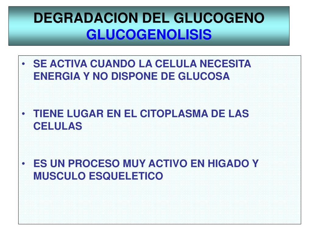 PPT - METABOLISMO DEL GLUCOGENO PowerPoint Presentation..