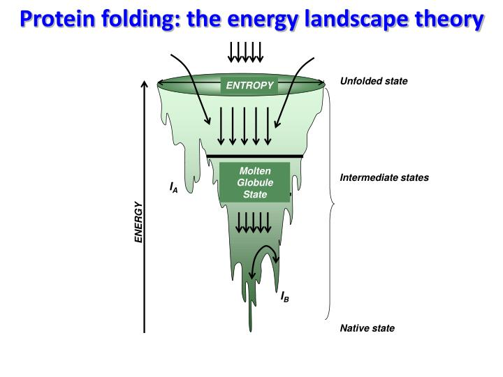 Protein folding: the energy landscape theory