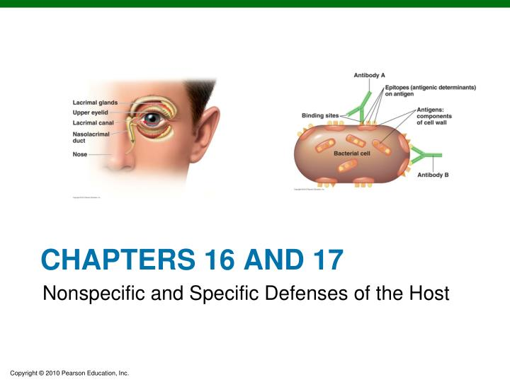 chapters 16 and 17 n.