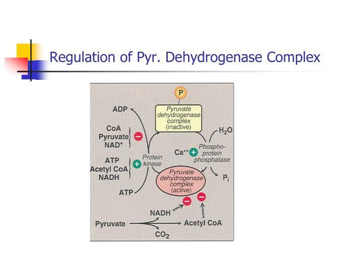 Regulation of Pyr. Dehydrogenase Complex