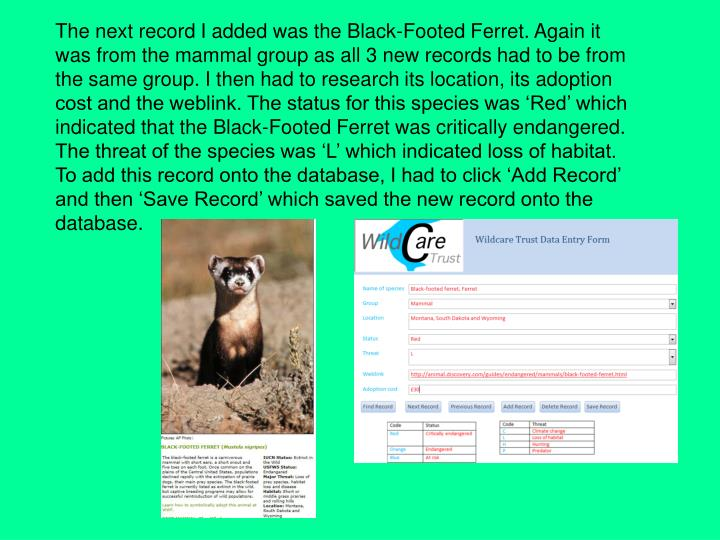 The next record I added was the Black-Footed Ferret. Again it was from the mammal group as all 3 new records had to be from the same group. I then had to research its location, its adoption cost and the weblink. The status for this species was 'Red' which indicated that the Black-Footed Ferret was critically endangered. The threat of the species was 'L' which indicated loss of habitat. To add this record onto the database, I had to click 'Add Record' and then 'Save Record' which saved the new record onto the database.