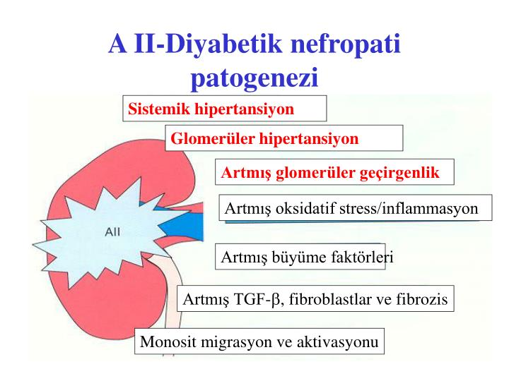 A II-Diyabetik nefropati patogenezi
