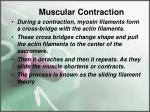 muscular contraction2